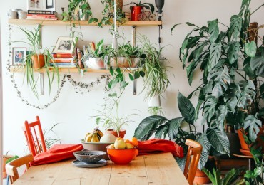 Furnishing with plants: everything you need to know!